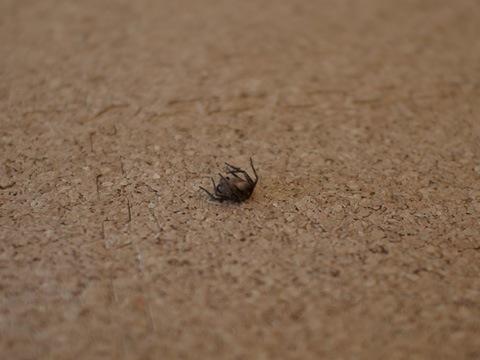 spider090715_2.jpg