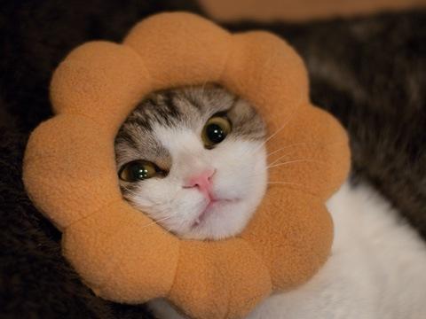 sunflower081227_1.jpg