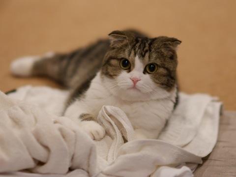 towel090617_1.jpg