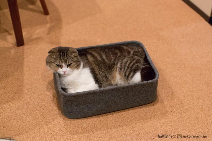収まらない猫柳