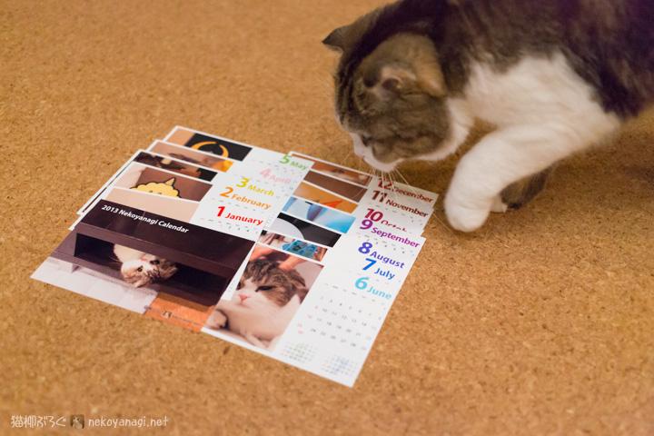 猫柳カレンダー(プレゼントあり)