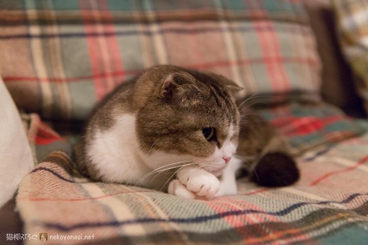 セルフ腕枕