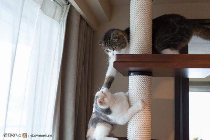 塔をめぐる攻防