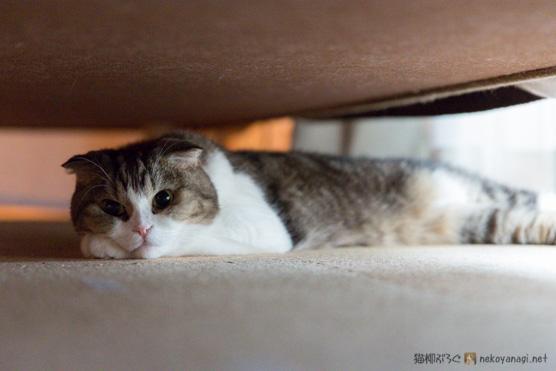 ソファの下で