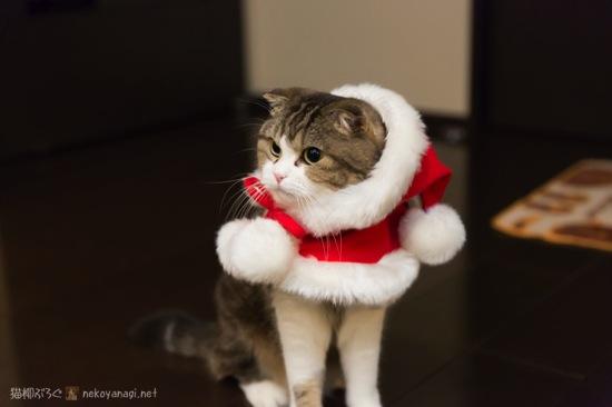 サンタです