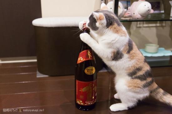 飲みたいにゃ〜!