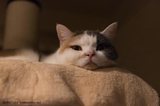 ユキの寝床