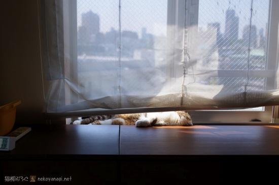 窓辺のヤナギ