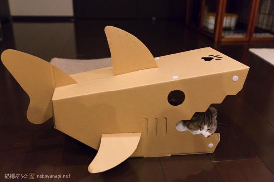 サメアクビ