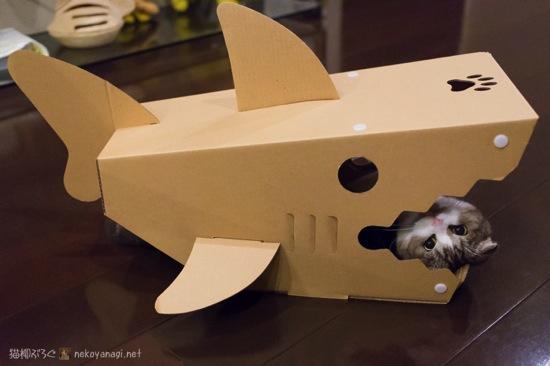サメからヒョコ