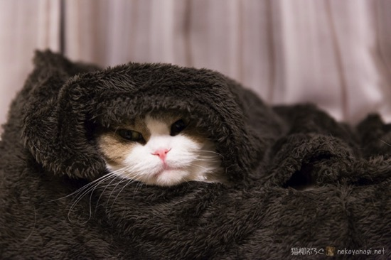 温々ベッド