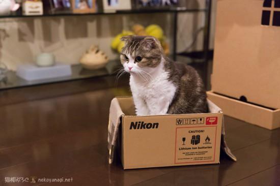 Nikon箱