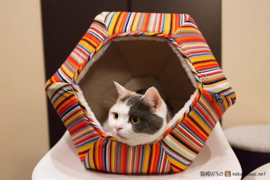 猫の巣使用中