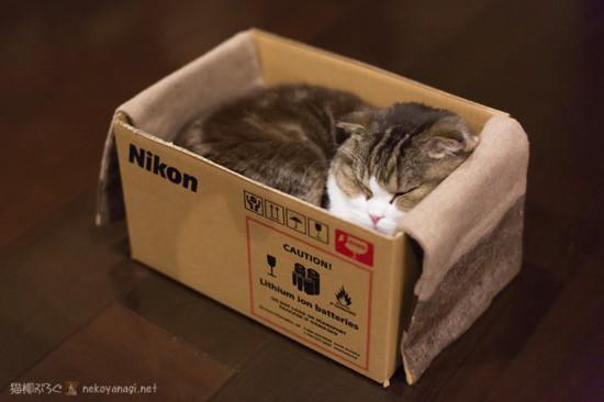 箱でお休み