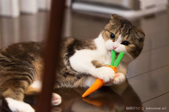猫の日のふたり