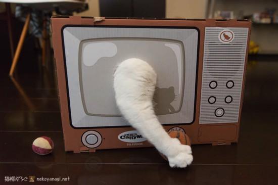 爪とぎテレビ