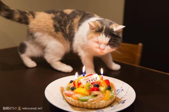 ユキ3歳の誕生日