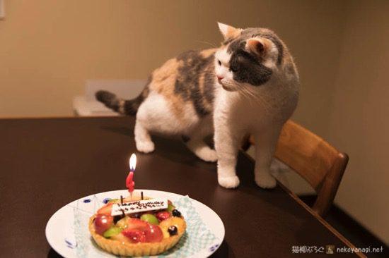 ユキ4歳の誕生日