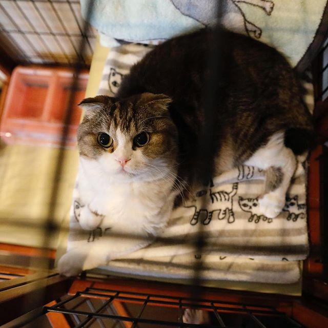 ユキの居場所を占拠してる。 猫柳ぶろぐ http://nekoyanagi.net