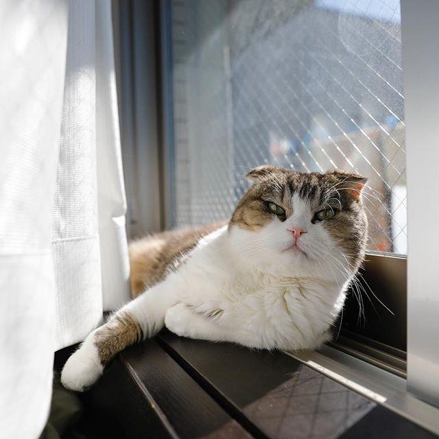 日なたぼっこ。 猫柳ぶろぐ https://nekoyanagi.net