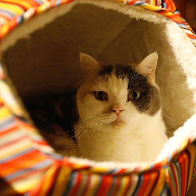 おやすみなさい! 猫柳ぶろぐ http://nekoyanagi.net