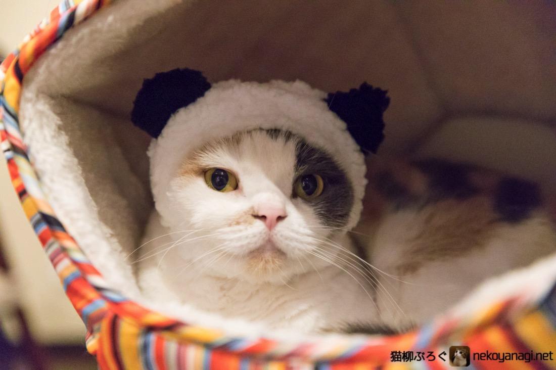 パンダになってみた