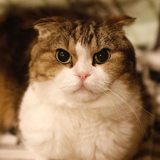 ヤナギはいつも黒目が大きい。 猫柳ぶろぐ http://nekoyanagi.net