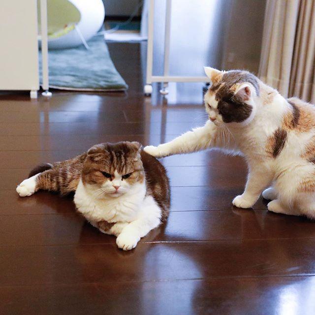 ねえねえ。 猫柳ぶろぐ http://nekoyanagi.net