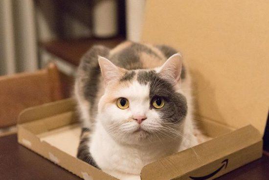 そこに箱があるから