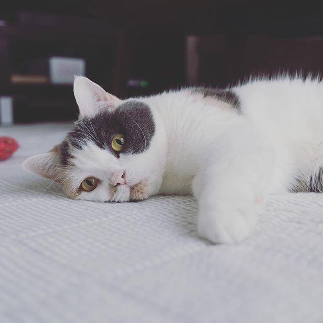 ペタッとしてる。 猫柳ぶろぐ https://nekoyanagi.net