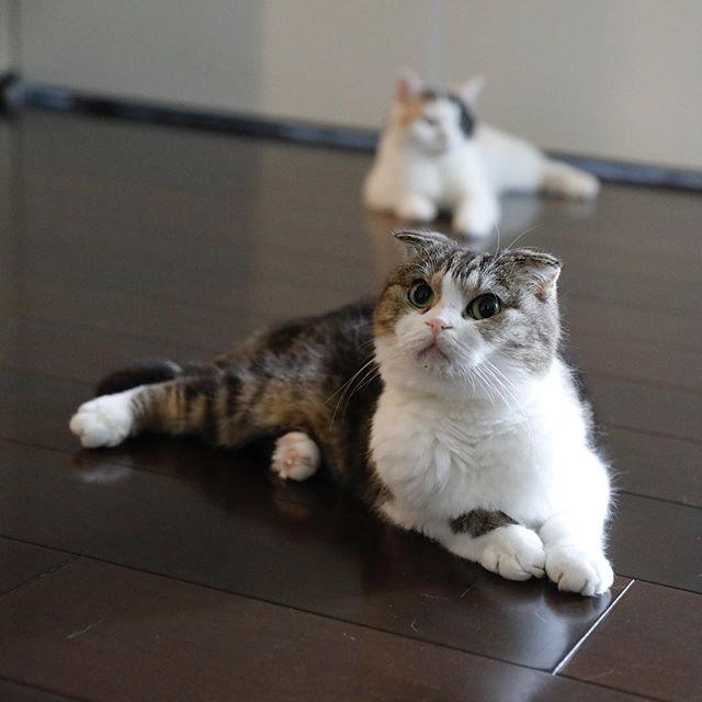 前後。 猫柳ぶろぐ https://nekoyanagi.net