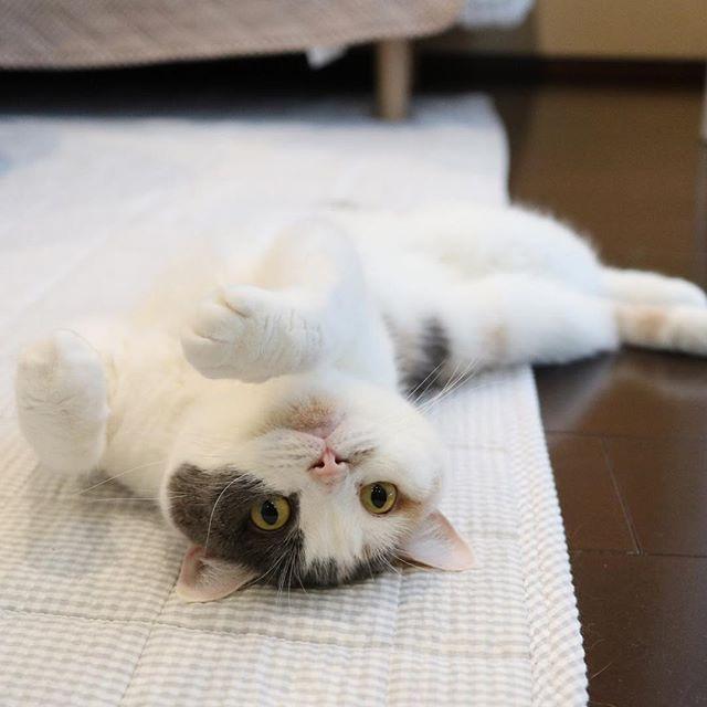 今日も暑いね。 猫柳ぶろぐ https://nekoyanagi.net