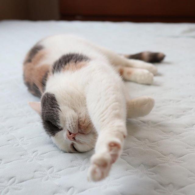 ぐいーん。 猫柳ぶろぐ https://nekoyanagi.net