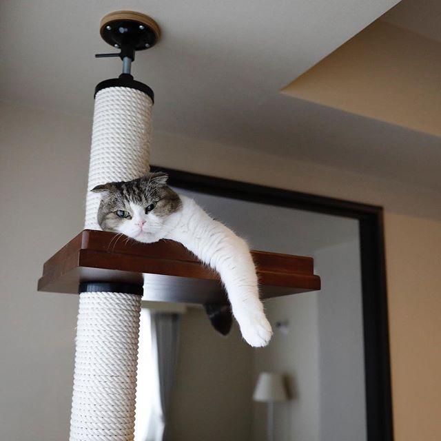 おはよう。 猫柳ぶろぐ https://nekoyanagi.net