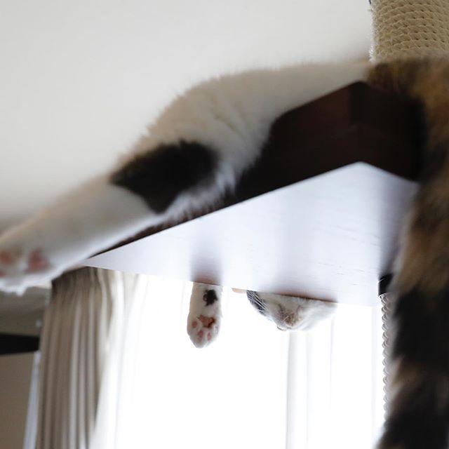 垂れている。 猫柳ぶろぐ https://nekoyanagi.net