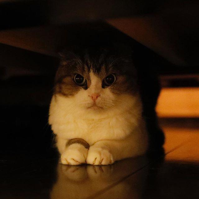雷にびびり中。 猫柳ぶろぐ https://nekoyanagi.net