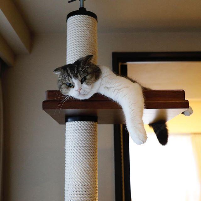 今日も休みでうらやましい。 猫柳ぶろぐ https://nekoyanagi.net