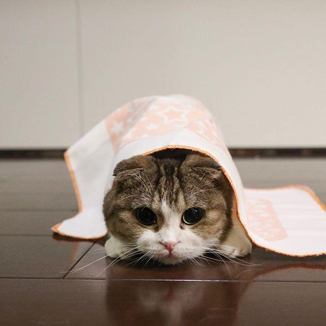 狙ってる。 猫柳ぶろぐ https://nekoyanagi.net