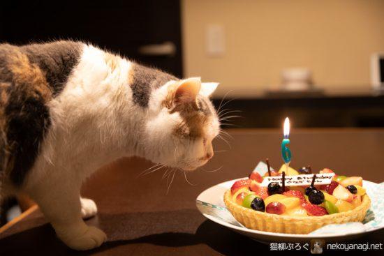 雪柳6歳の誕生日