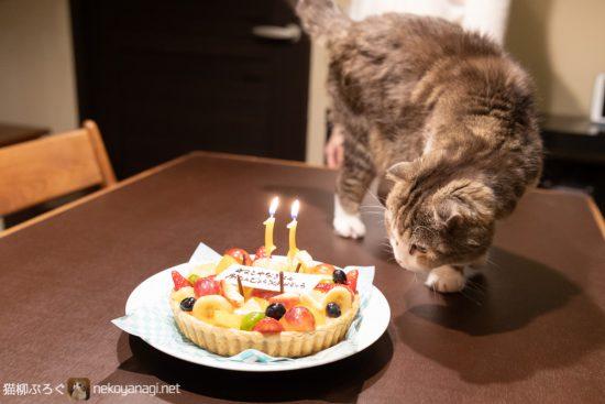 猫柳11歳の誕生日