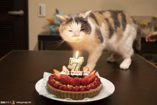 雪柳7歳の誕生日